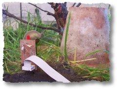 snailoverreader
